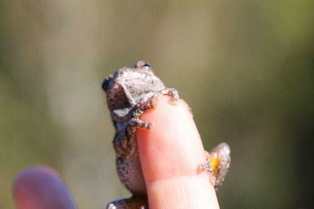 tree frog 5